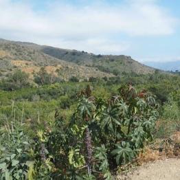 The stunning Ojai Valley